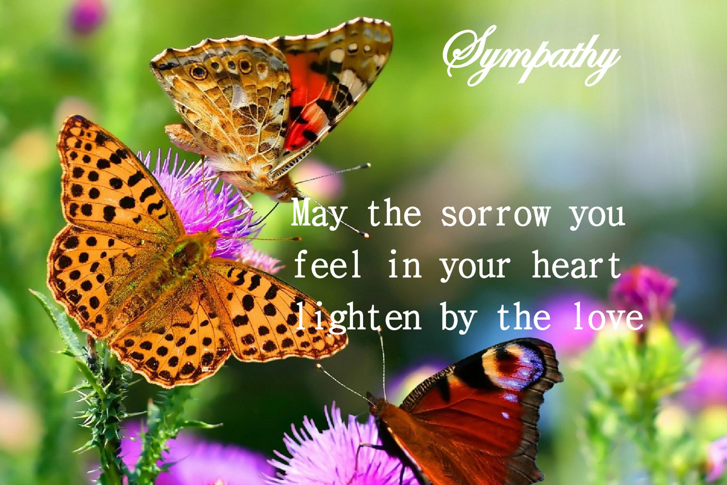 Free Sympathy Message Template 01