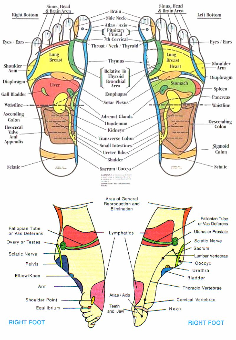 Free foot reflexology chart 02