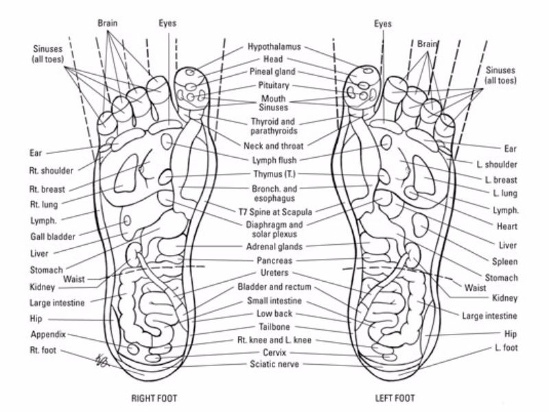 31 Printable Foot Reflexology Charts & Maps ᐅ TemplateLab