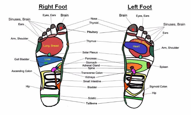 foot reflexology chart 05 screenshot