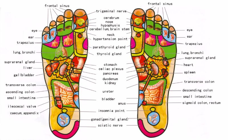 Free foot reflexology chart 07