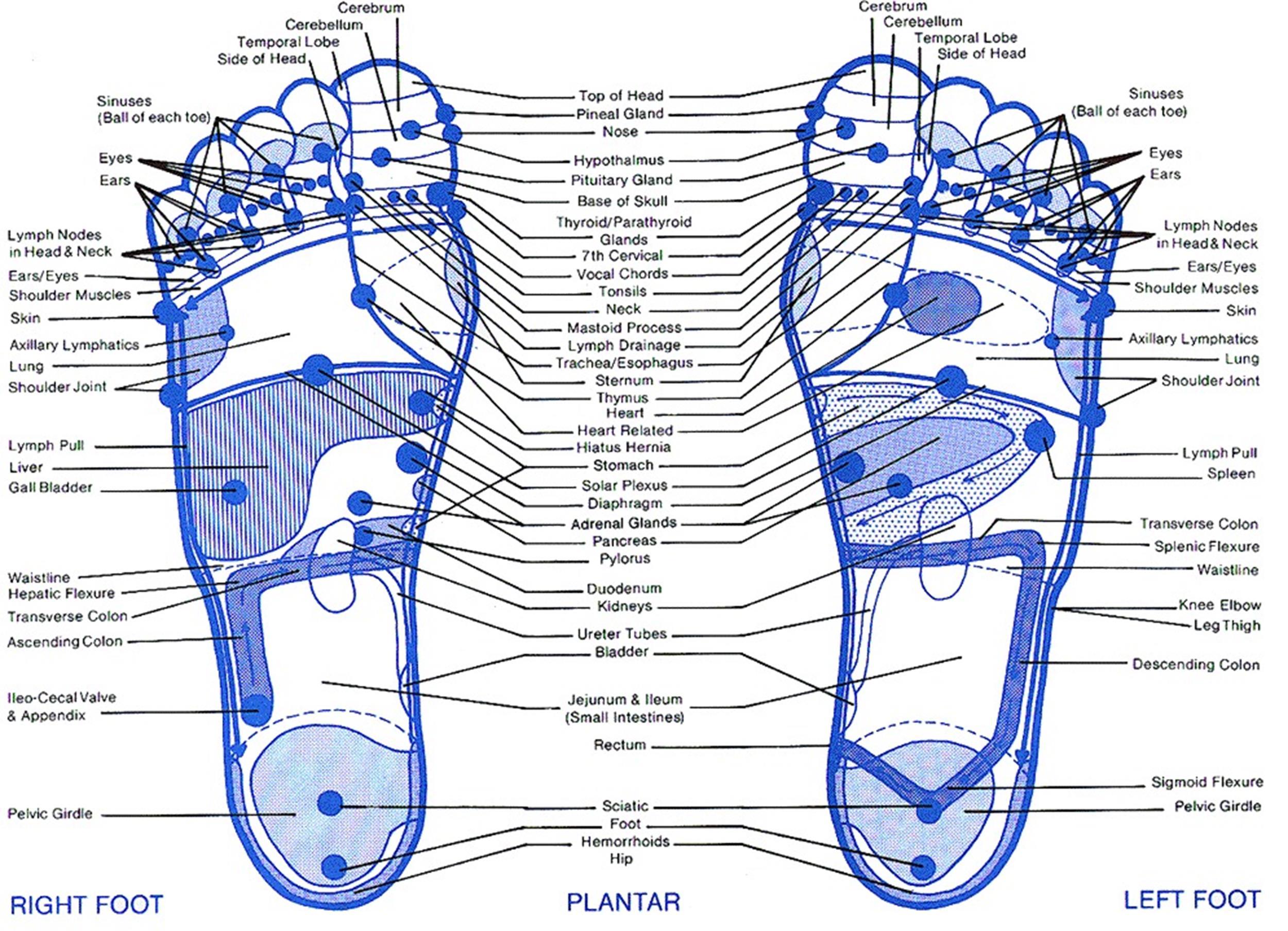 Free foot reflexology chart 08