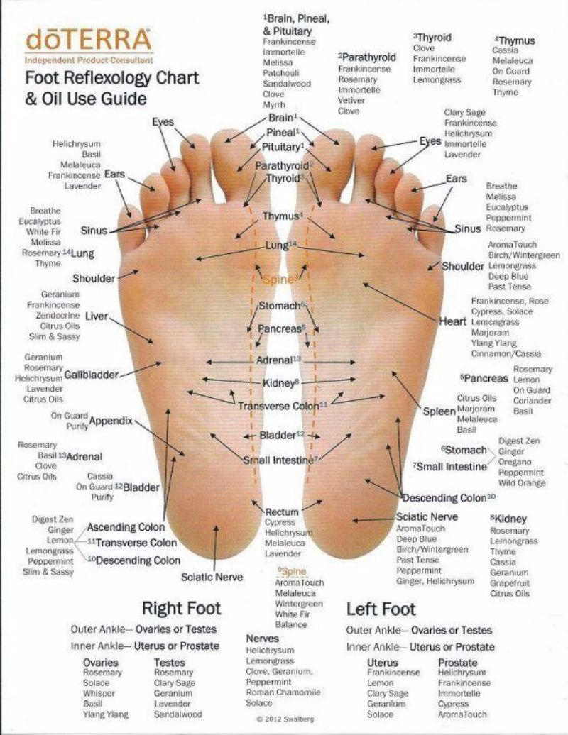 Free foot reflexology chart 11