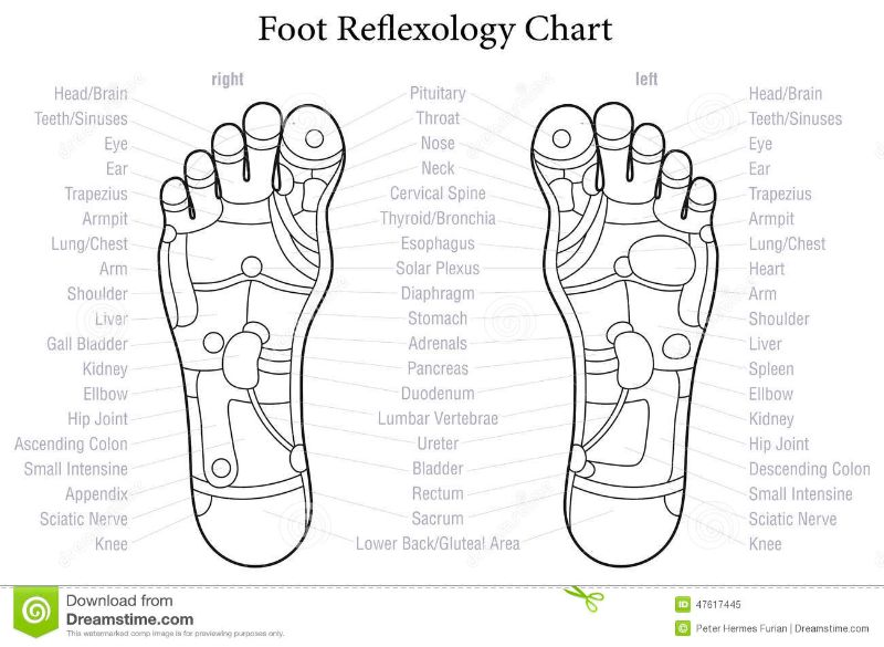 31 Printable Foot Reflexology Charts Maps Template Lab