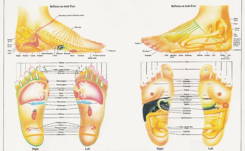 Printable Foot Reflexology Charts  Maps  Template Lab