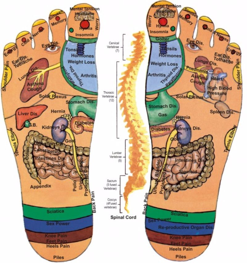 Free foot reflexology chart 17