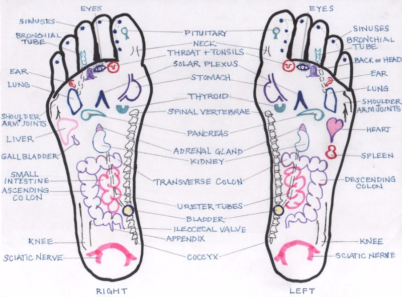 31 Printable Foot Reflexology Charts & Maps - Template Lab