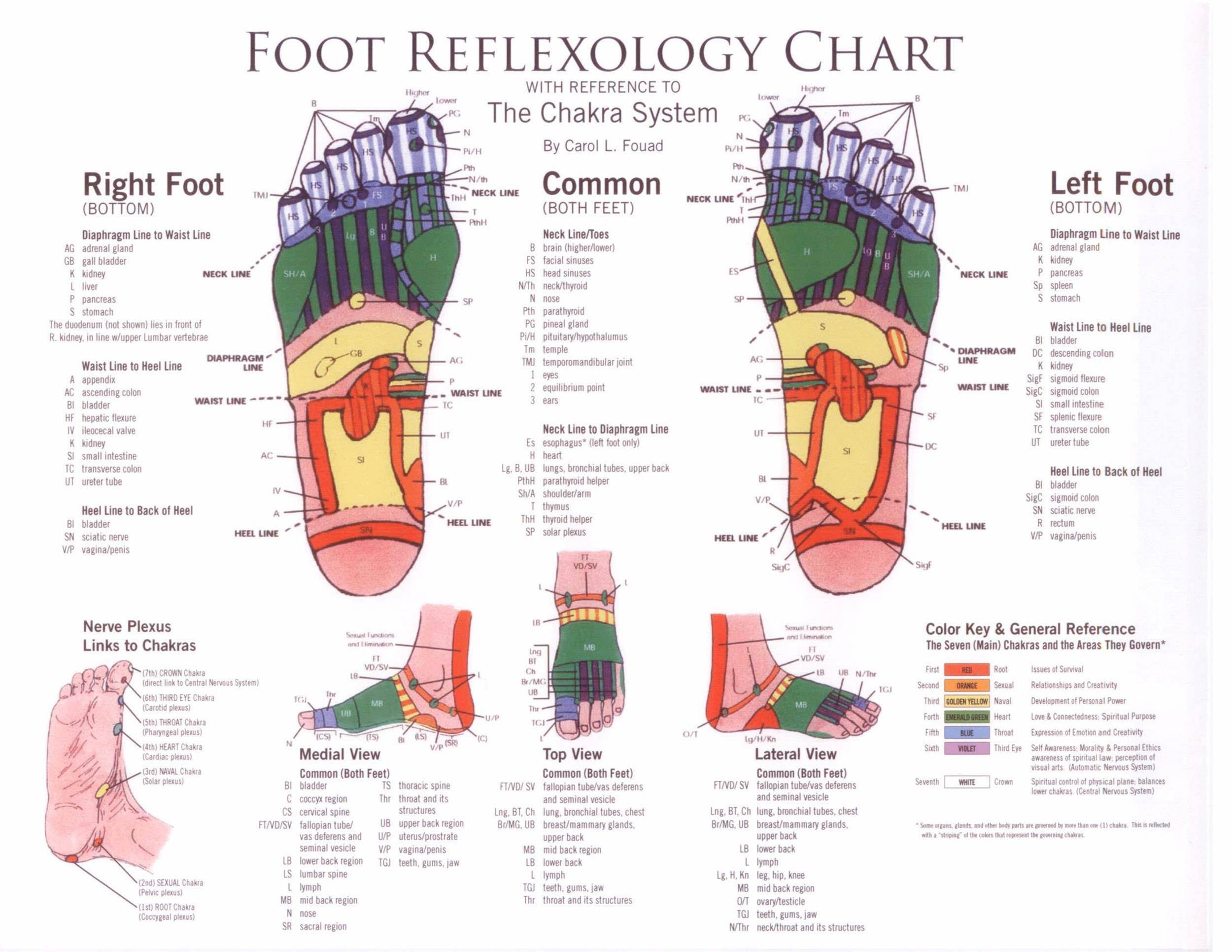 Free foot reflexology chart 22