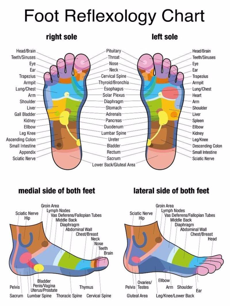 Free foot reflexology chart 23