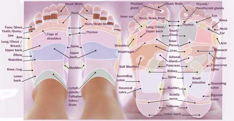 Free foot reflexology chart 27