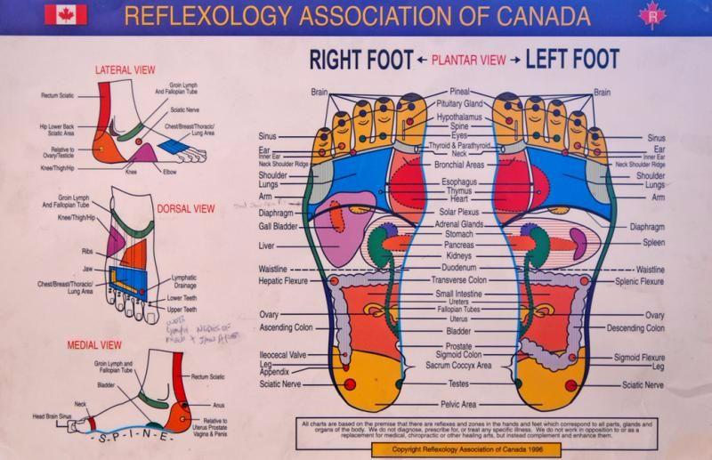 Free foot reflexology chart 28