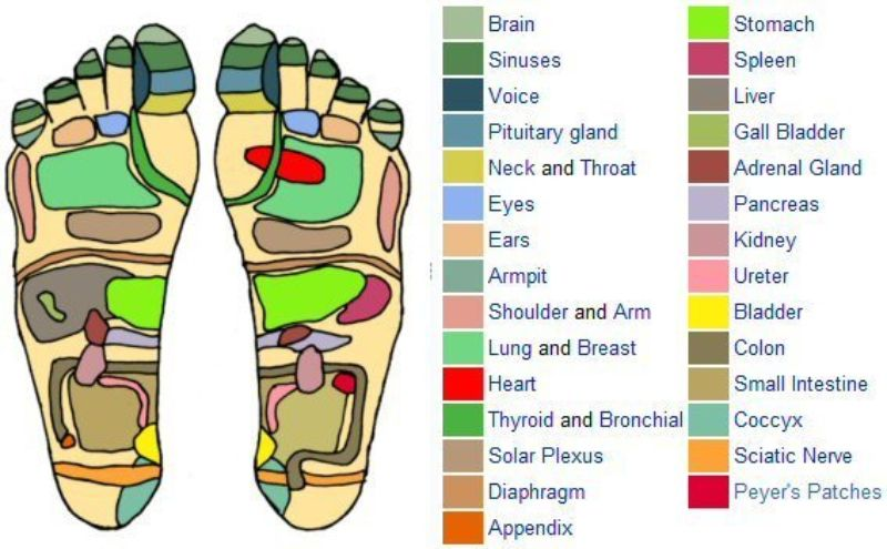 Free foot reflexology chart 29