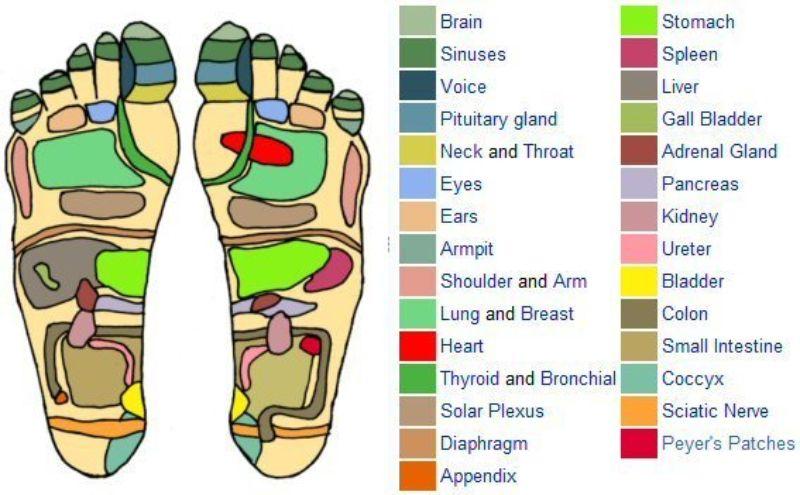 foot reflexology chart 29 screenshot
