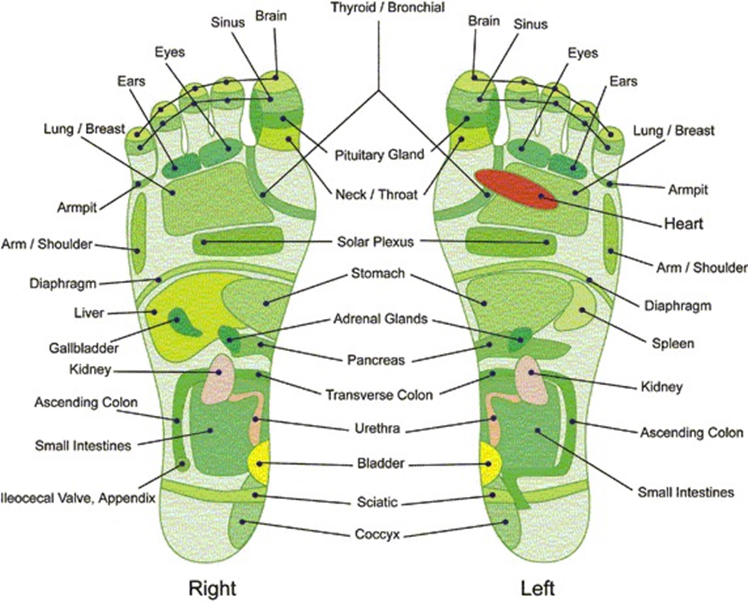 foot reflexology chart 30 screenshot