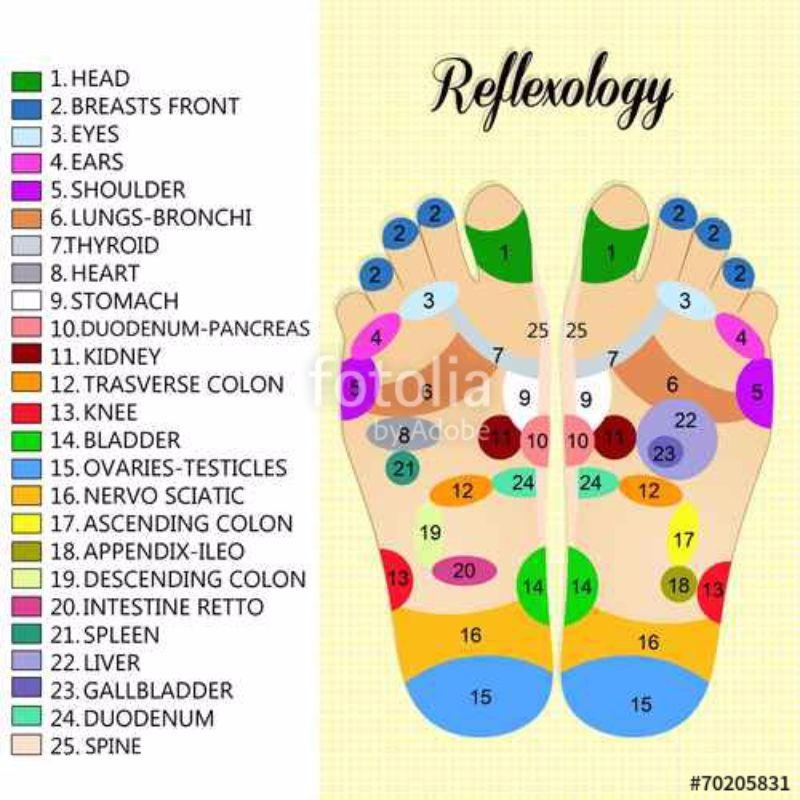 Free foot reflexology chart 31