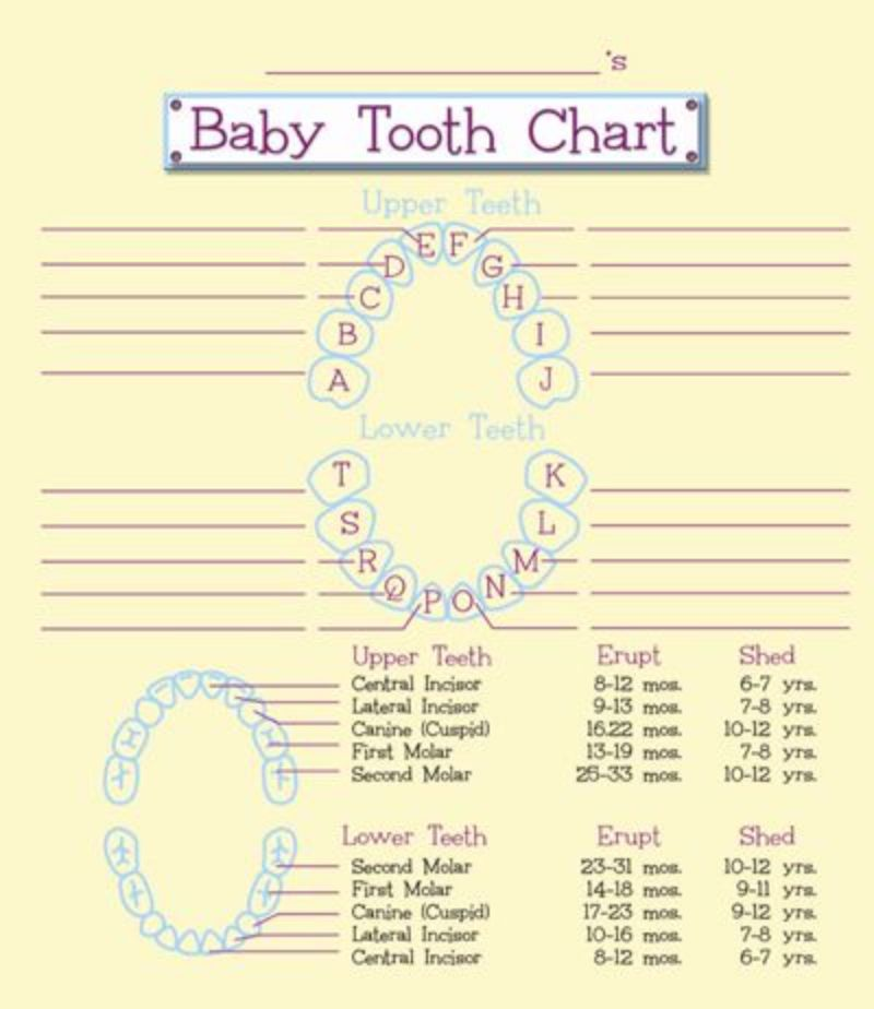 graphic regarding Baby Teeth Chart Printable called 38 Printable Boy or girl Tooth Charts Timelines ᐅ Template Lab
