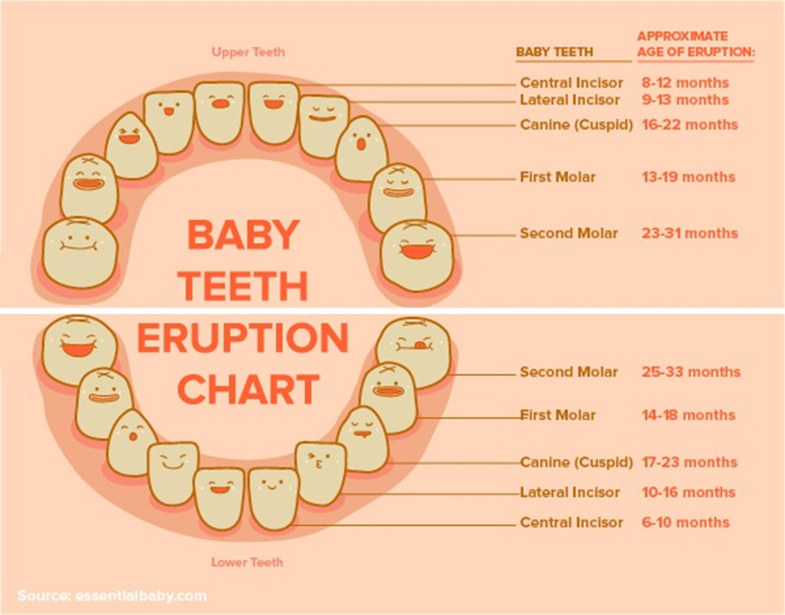 Free Baby Teeth Chart 08
