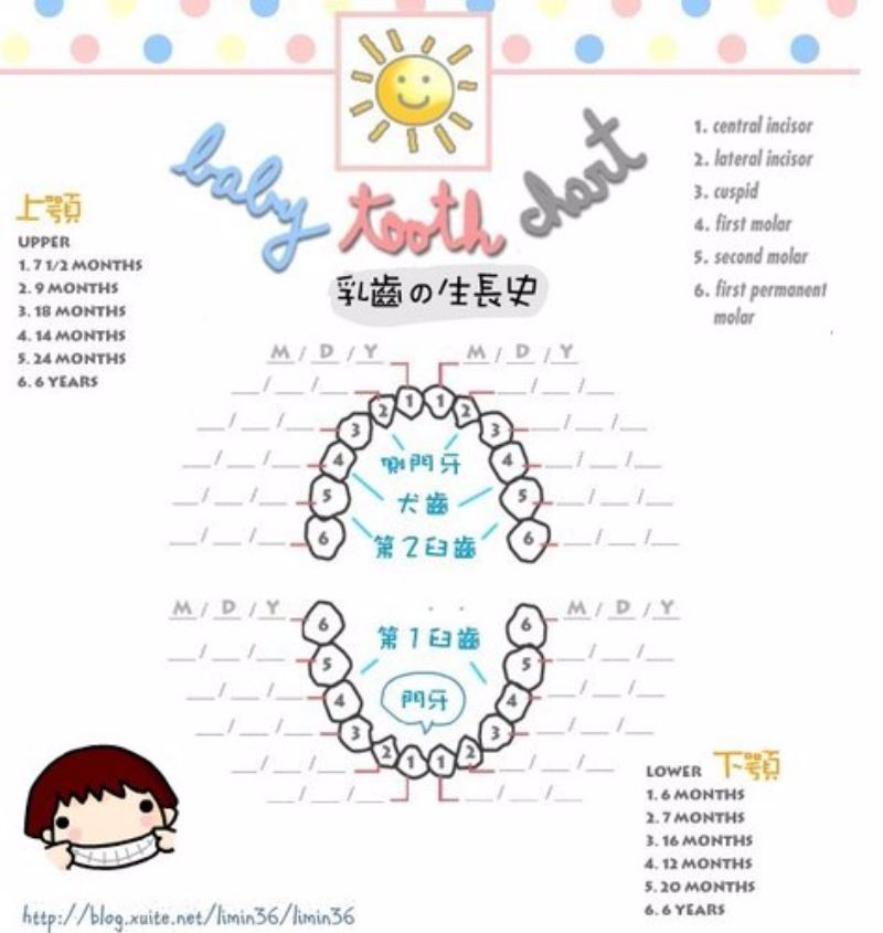 baby teeth chart 11 - screenshot