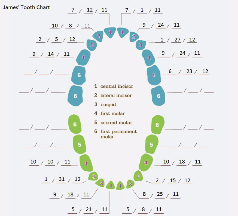 Free Baby Teeth Chart 12