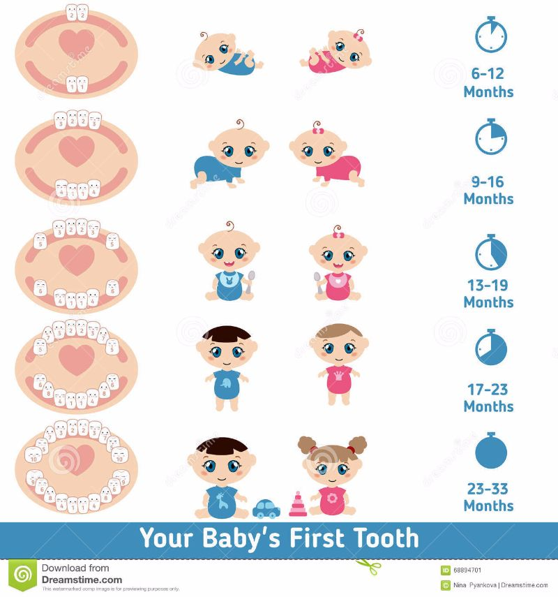 Free Baby Teeth Chart 13