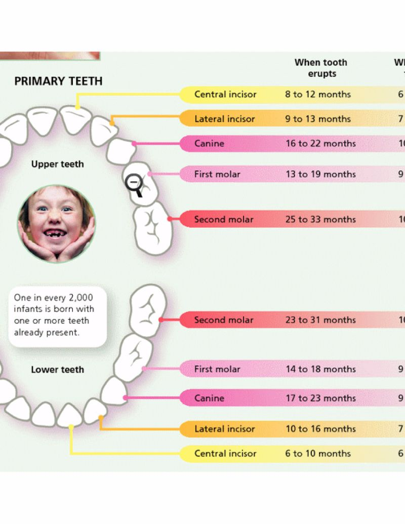 baby teeth chart 20 - screenshot