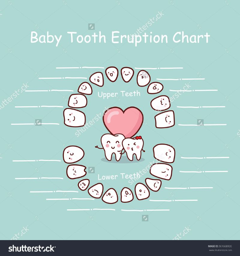 Printable Baby Teeth Charts  Timelines  Template Lab