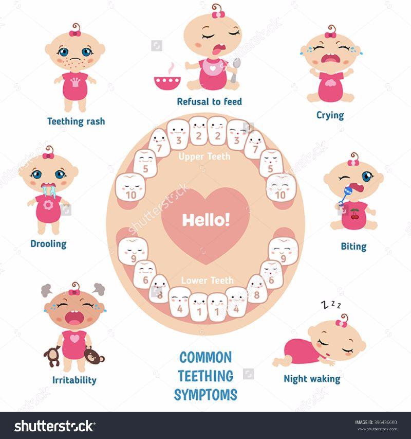 Free Baby Teeth Chart 22