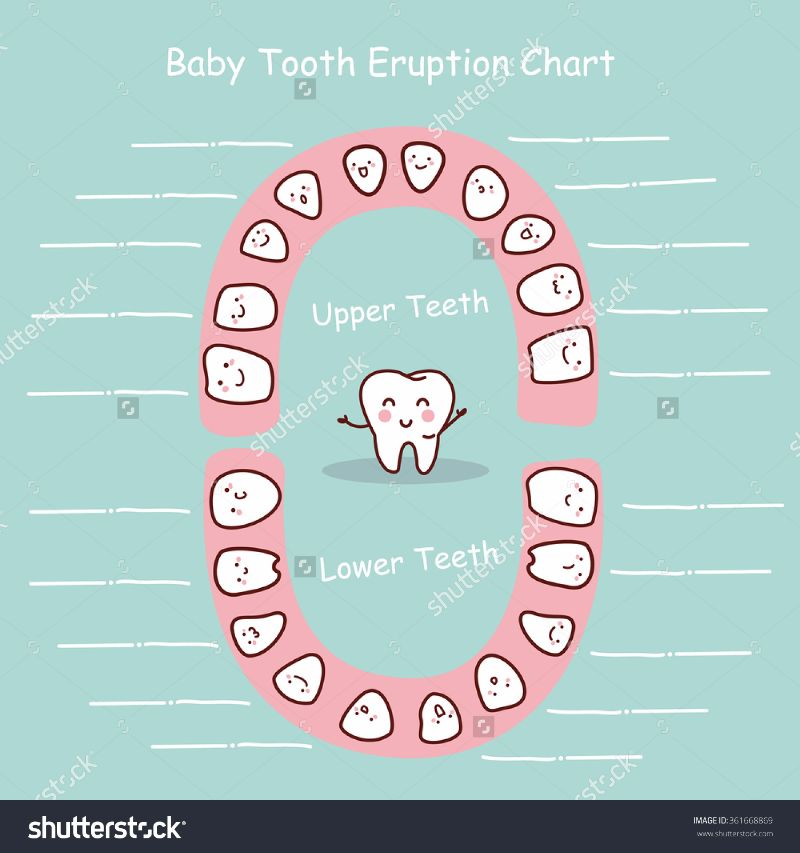 38 Printable Baby Teeth Charts Timelines Template Lab