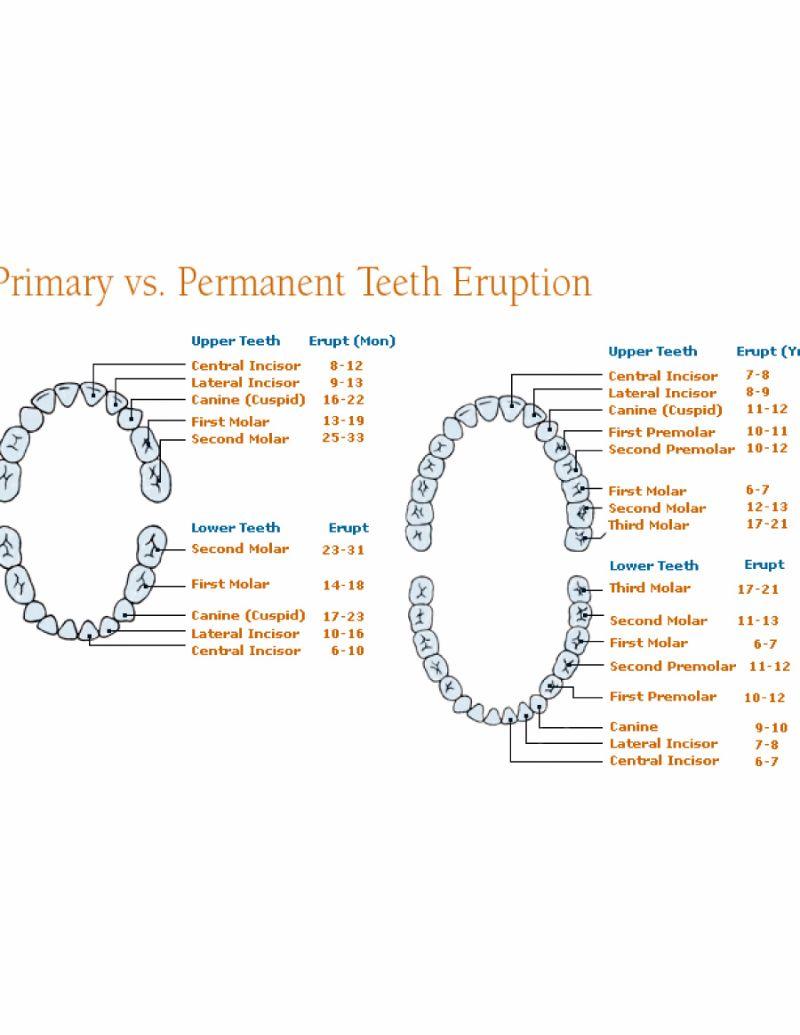Free Baby Teeth Chart 24