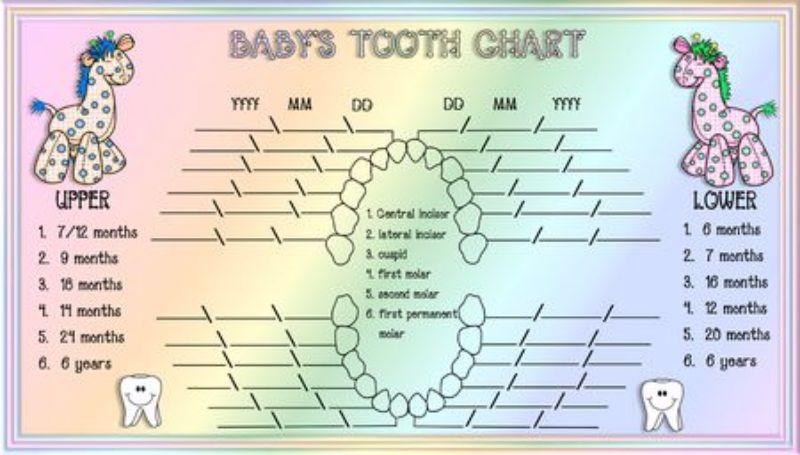 Free Baby Teeth Chart 27