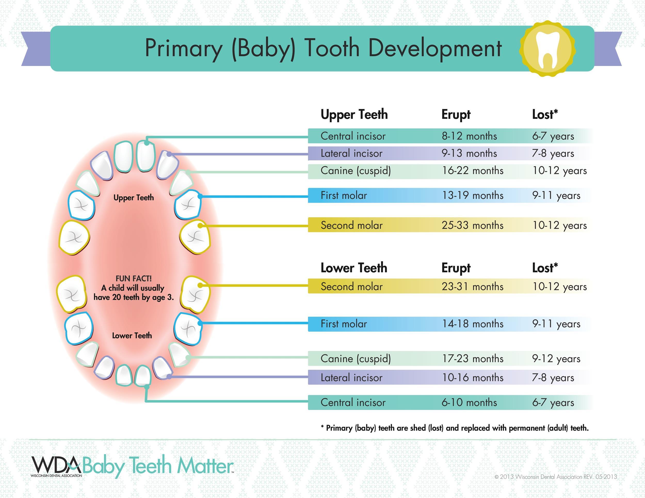 Free Baby Teeth Chart 35