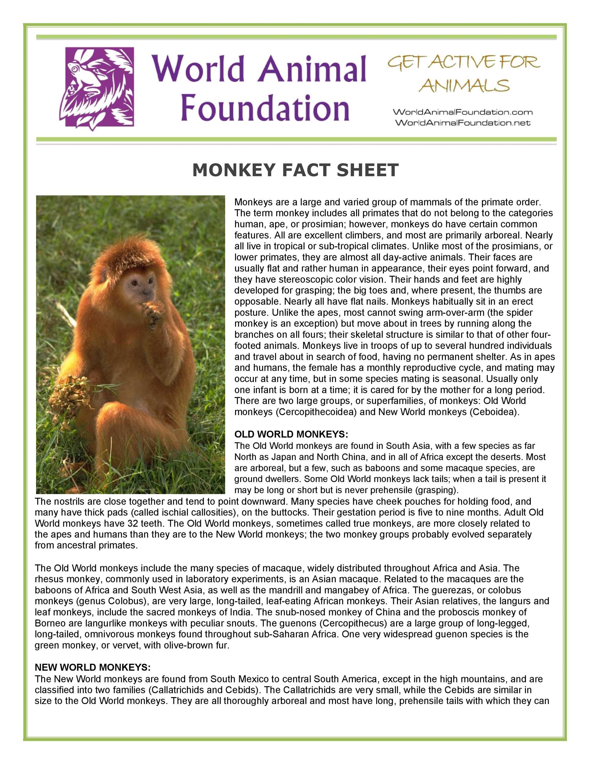 Free Fact sheet Template 20