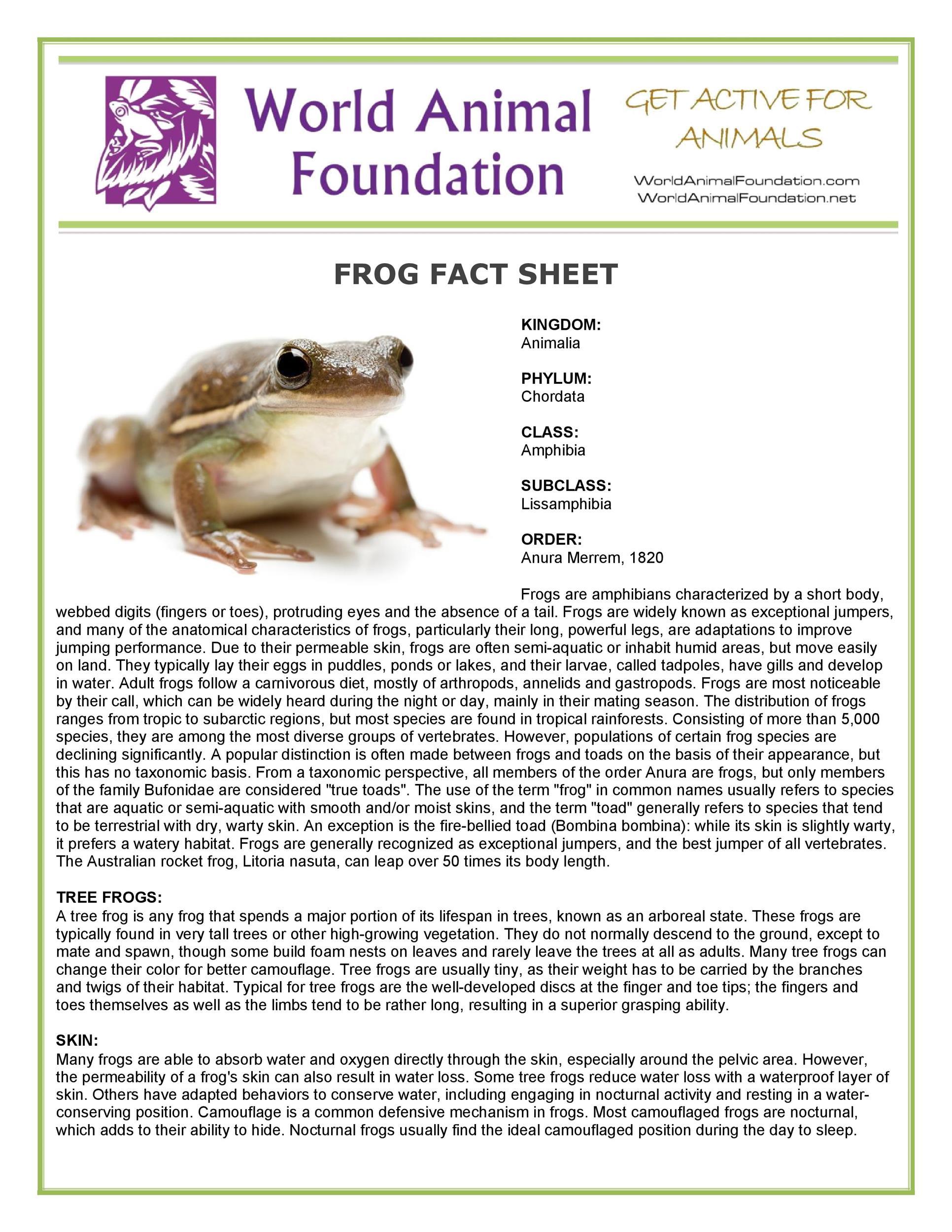 Free Fact sheet Template 60