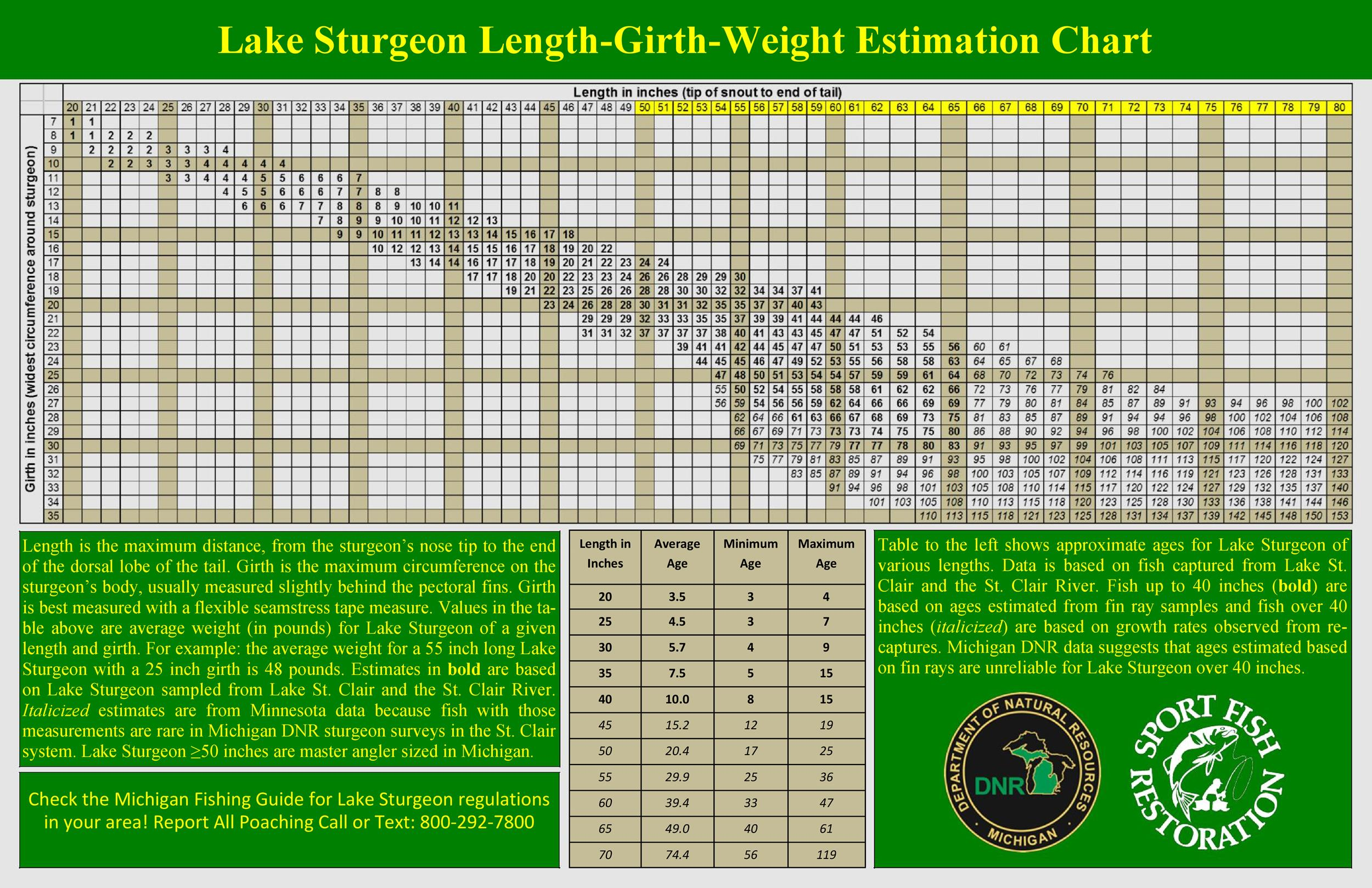 Free ideal weight chart 38