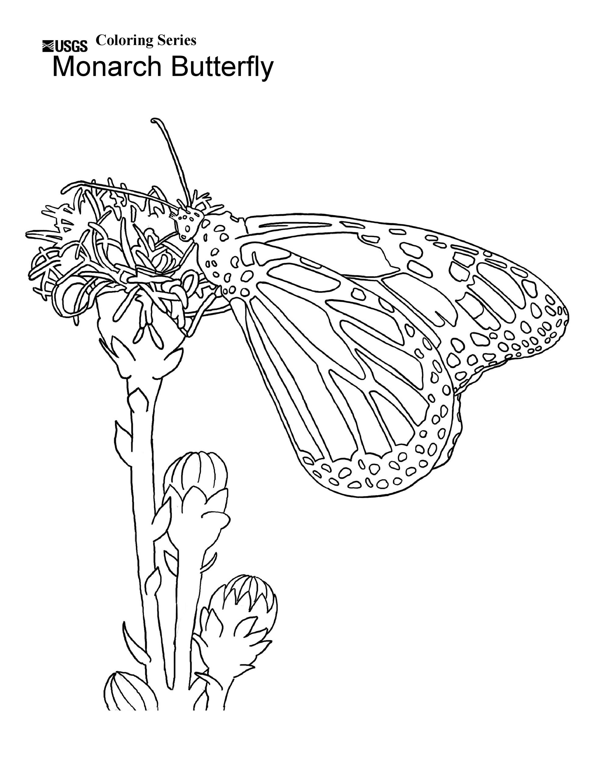 Free butterfly template 23