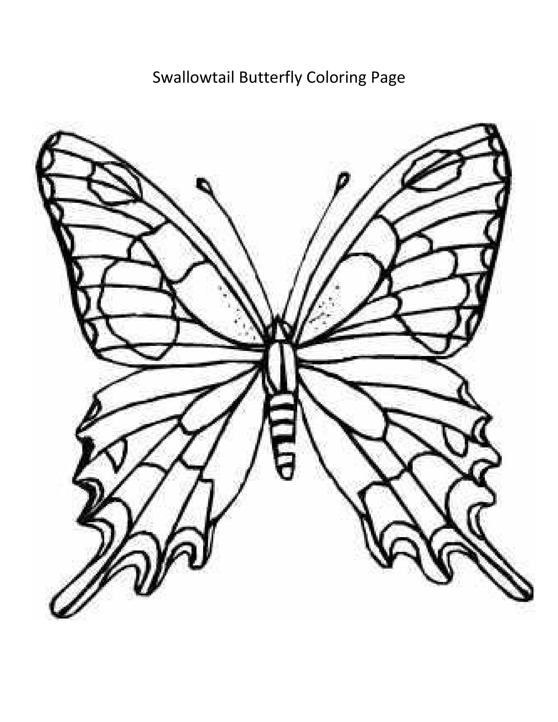 Free butterfly template 24