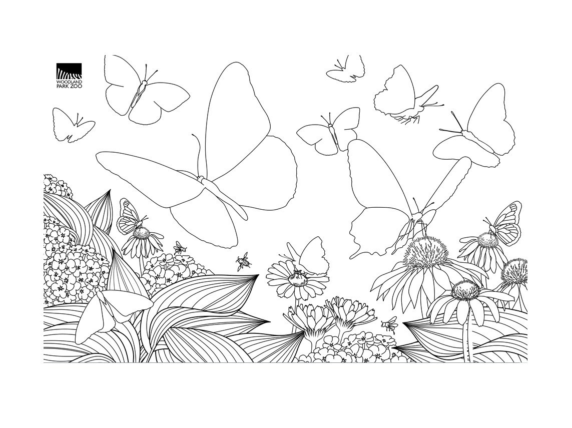Free butterfly template 44