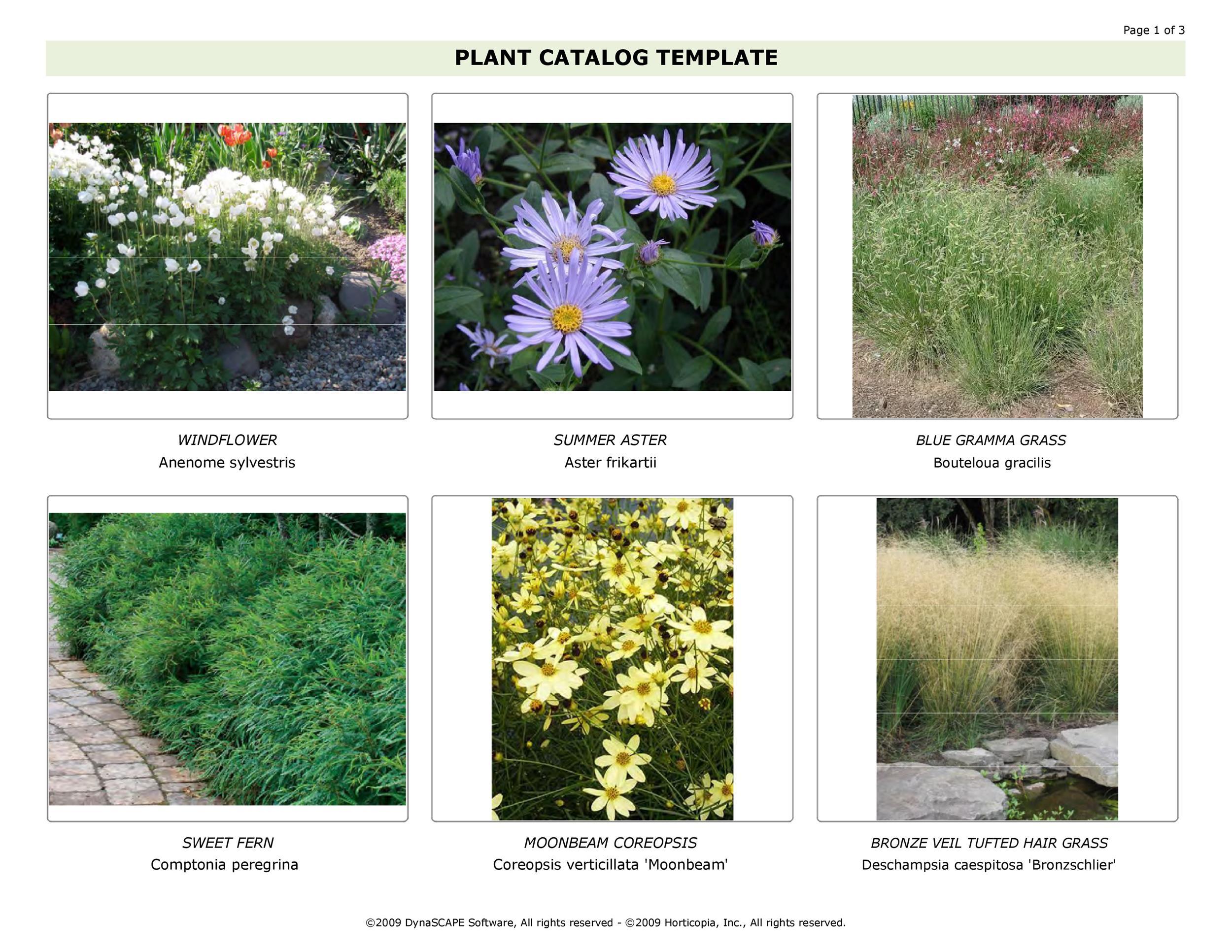Free catalog template 16