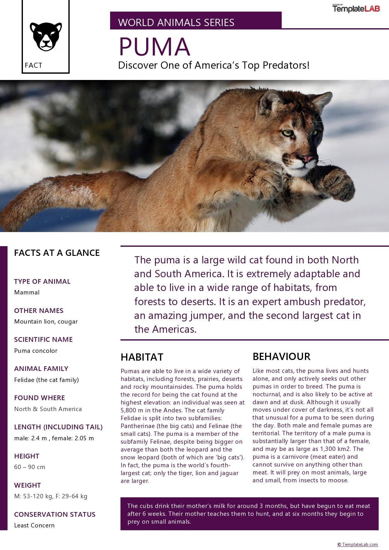 Free Animal Fact Sheet Template - TemplateLab.com